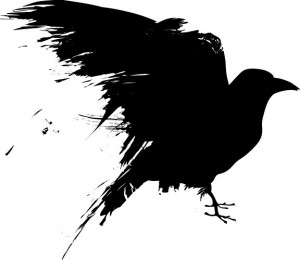 Daily Crow  Seasons and Synchronicity
